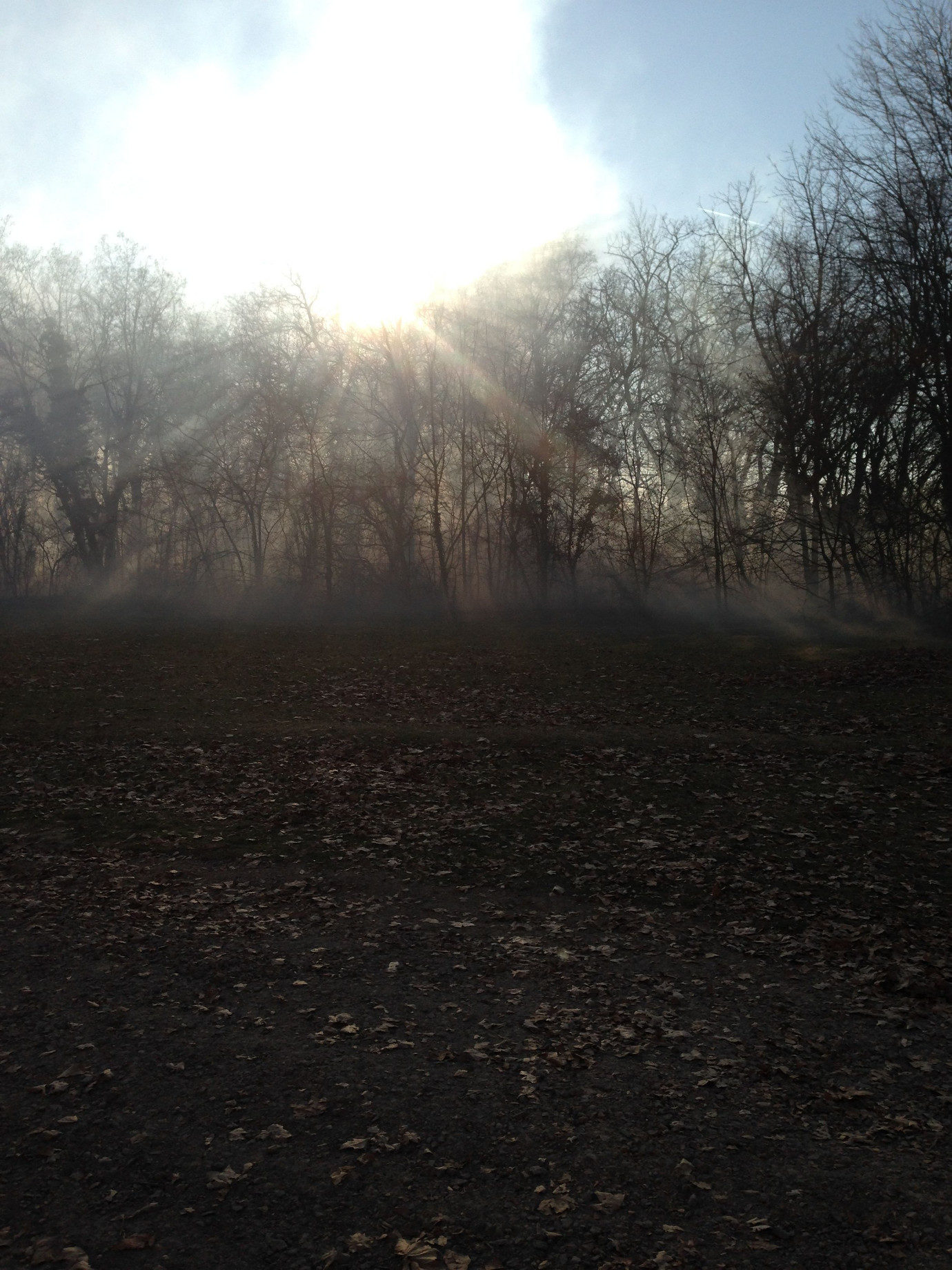 We pumped in mist to fill the woods for a party scene.