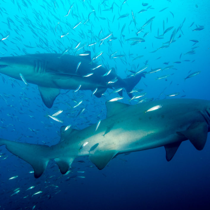 Which Book Should You Read During Shark Week?
