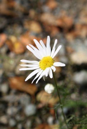 A flower of autumn