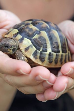 Classroom Pets Aren't Just There For Cuteness.