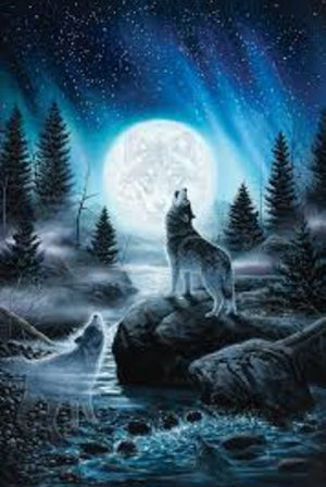 ~Star wolf~ Book one, the first night (This book is kinda like a wolf version of warriors)